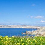 Flora at Majjistral Nature and History Park, Malta
