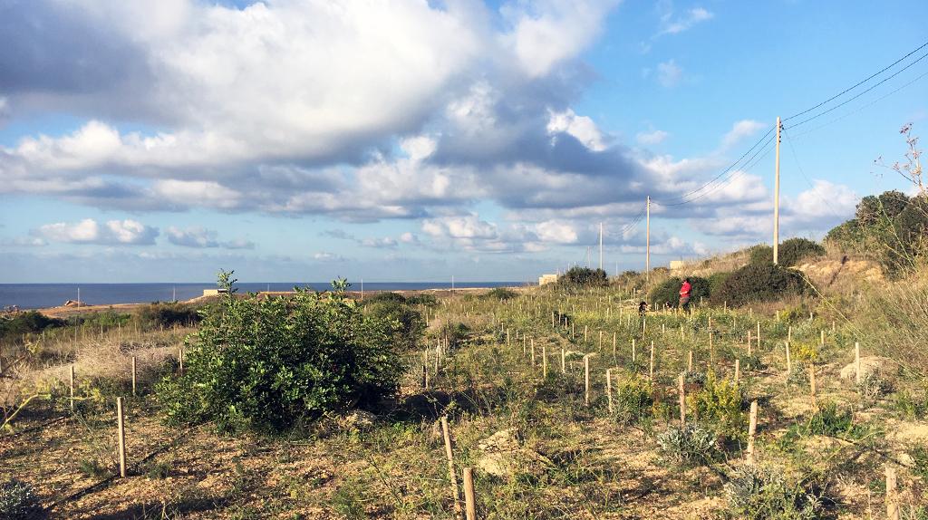 Afforestation Naħħalija