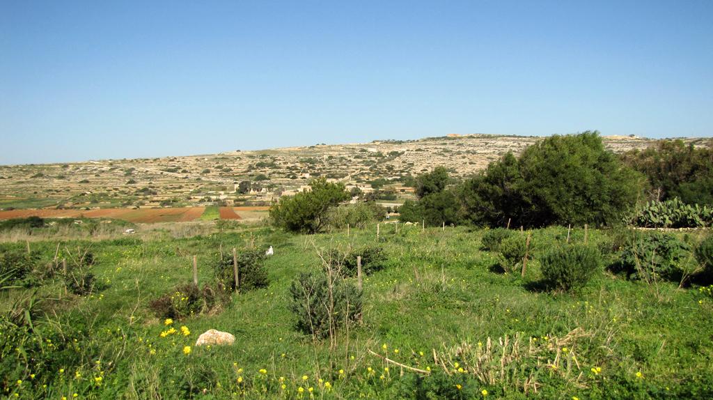 Afforestation Xagħra-l-Ħamra