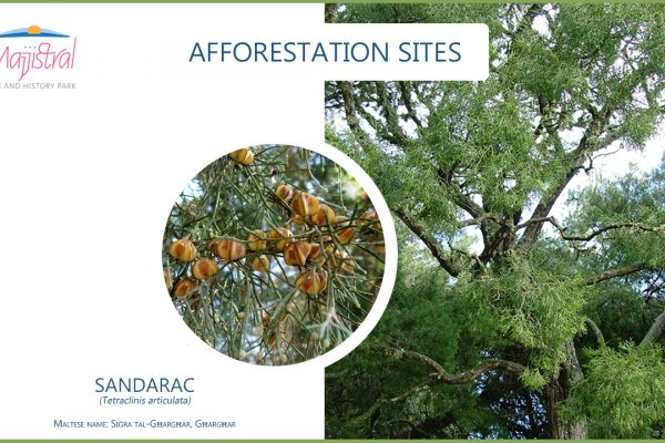 Afforestation sites
