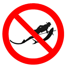 No spearfishing