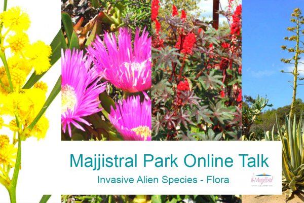 Invasive Alien Flora Species