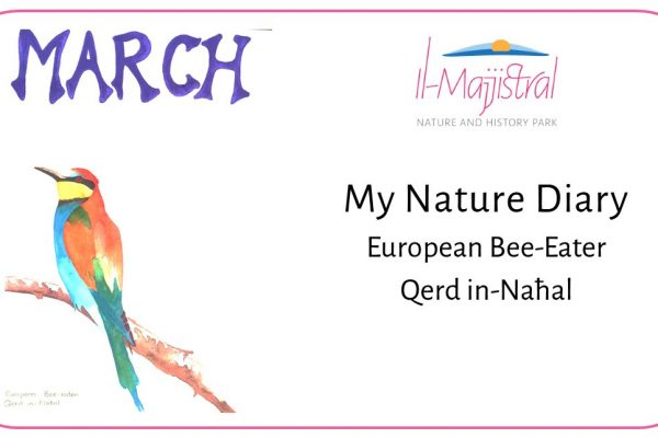 Nature Diary-Session 3