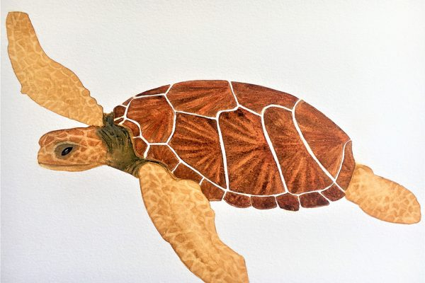 My Nature Diary Painting Activity -Session 5