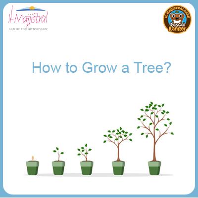 How to Grow a Tree?