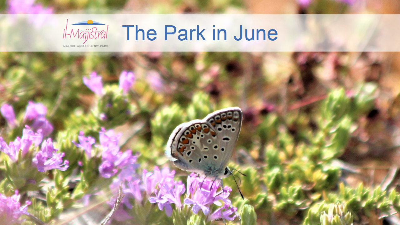The Park in June